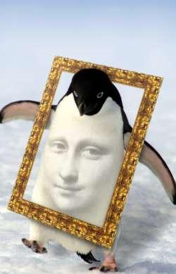 Antarctic Mona
