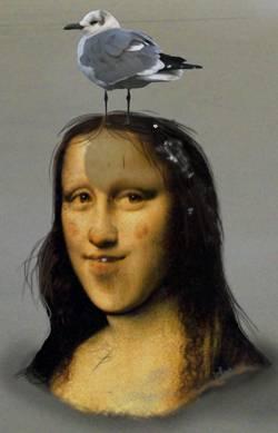 Gull Lisa