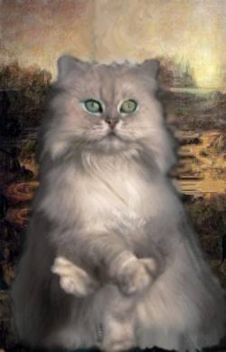 Kitty...kitty...kitty...