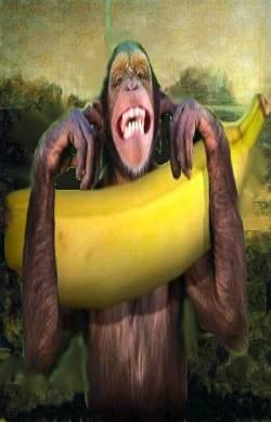 Monkey Mona